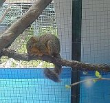 New squirrel arrival at the Rainbow Wildlife Rescue